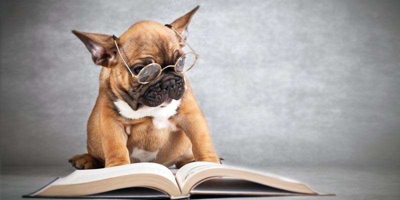 La-scienza-del-cane-800x400-800x400