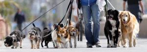 dog-sitter