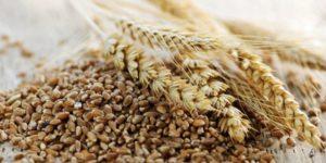 cereali_alternativi